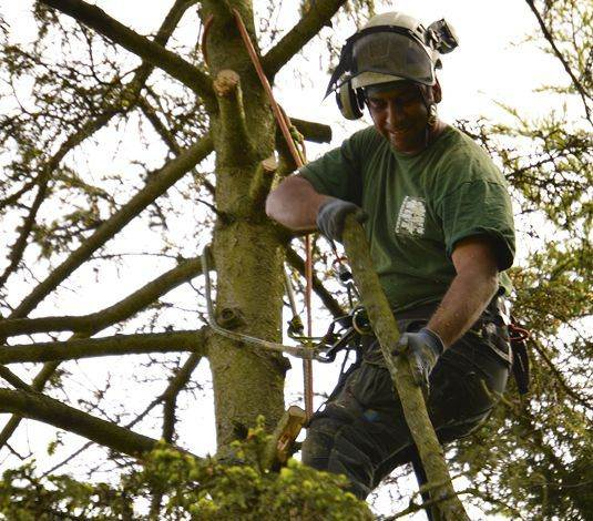 tree surgery in bromley and west wickham