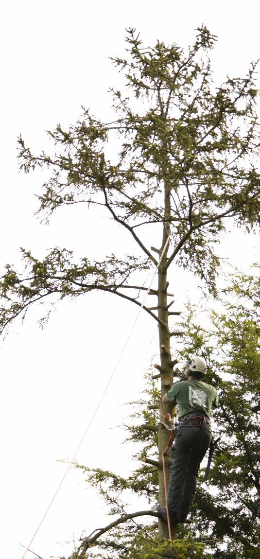 tree pruning bromley