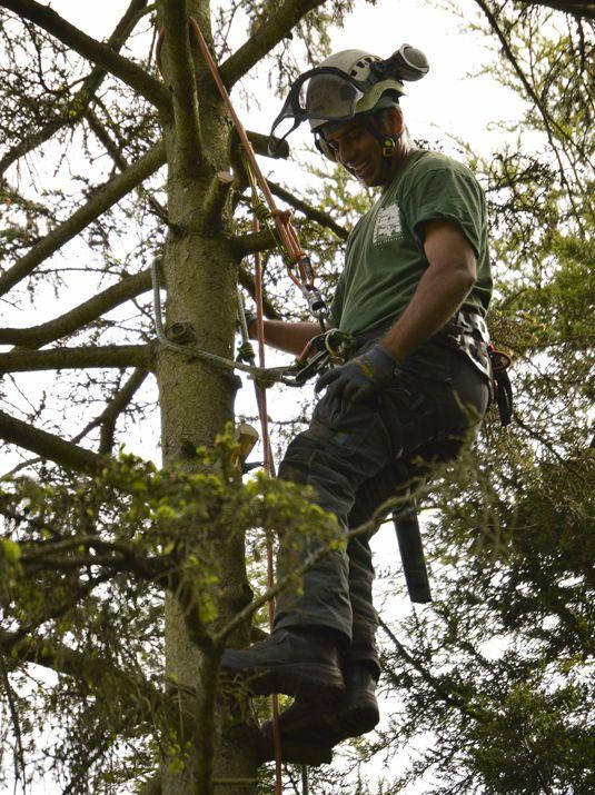 tree services in bromley region