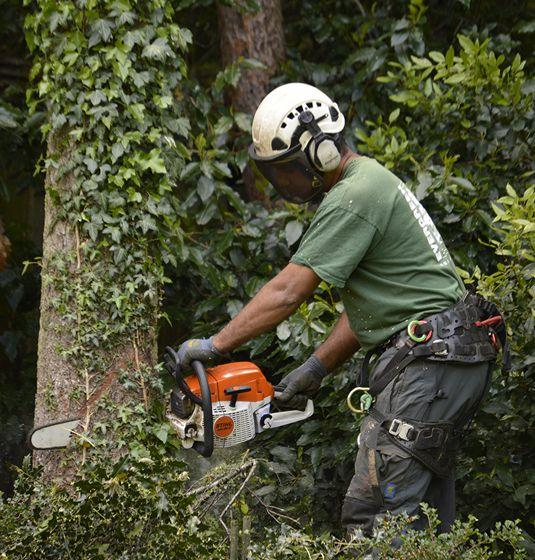 tree services across bromley and kent area
