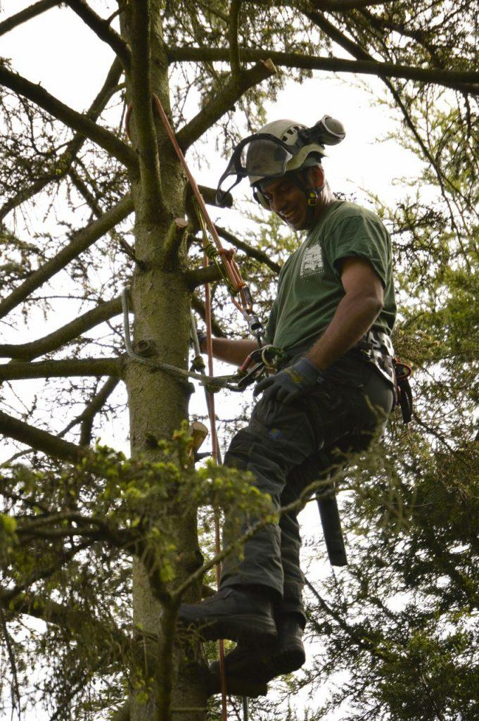 tree surgeon in bromley area