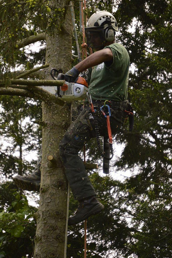 tree surgeon in west wickham and bromley