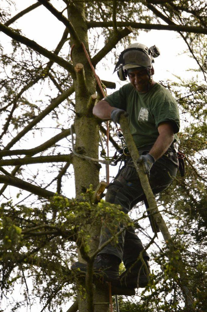 tree surgeon pruning tree in bromley