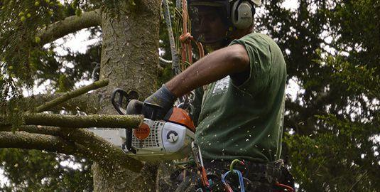 tree surgeon west wickham