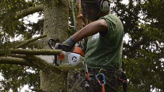 tree surgeon bromley