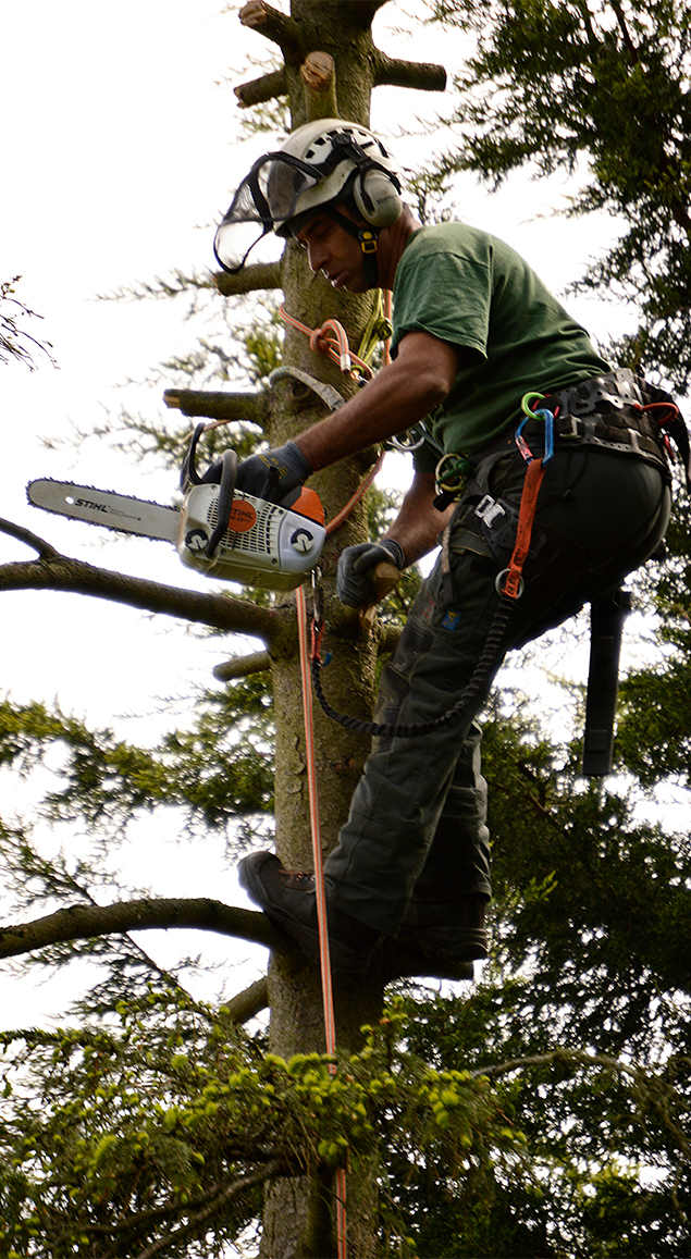 tree surgeon elmers end