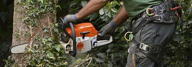 tree-surgeon-park-langley