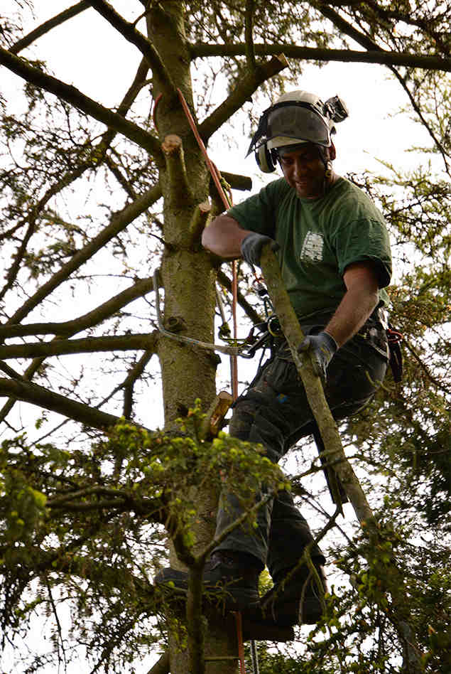 tree surgery south london