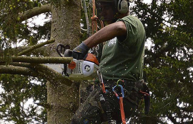 tree surgeon keston