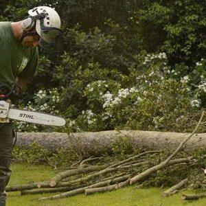 professional tree surgeon epsom