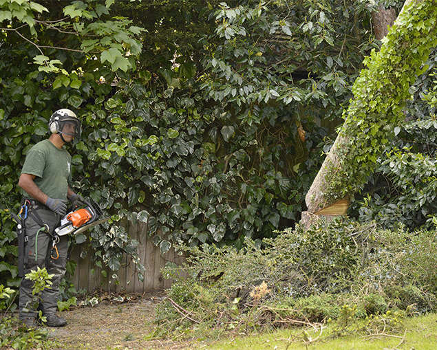 tree-surgeon-biggin hill