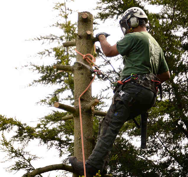 tree surgeons shortlands