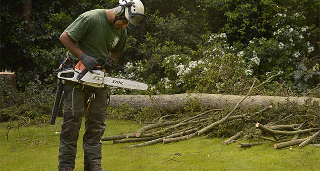 tree-surgeon-in-hayes