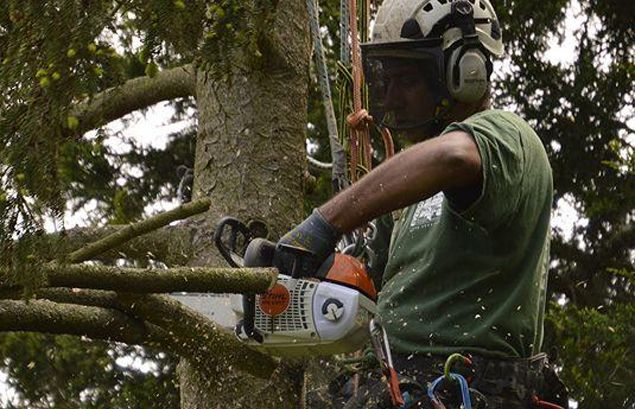 tree surgeon crofton
