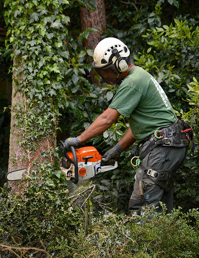 tree surgeon locksbottom