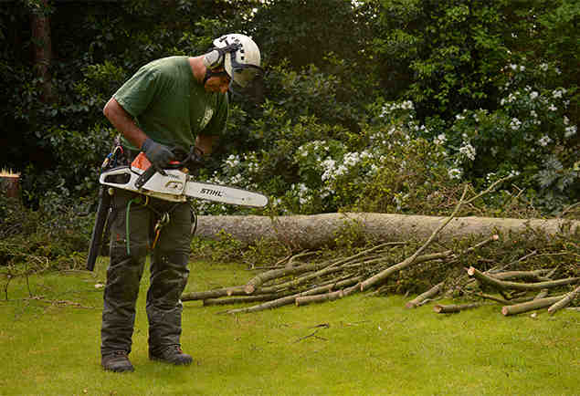 tree surgeon eden park