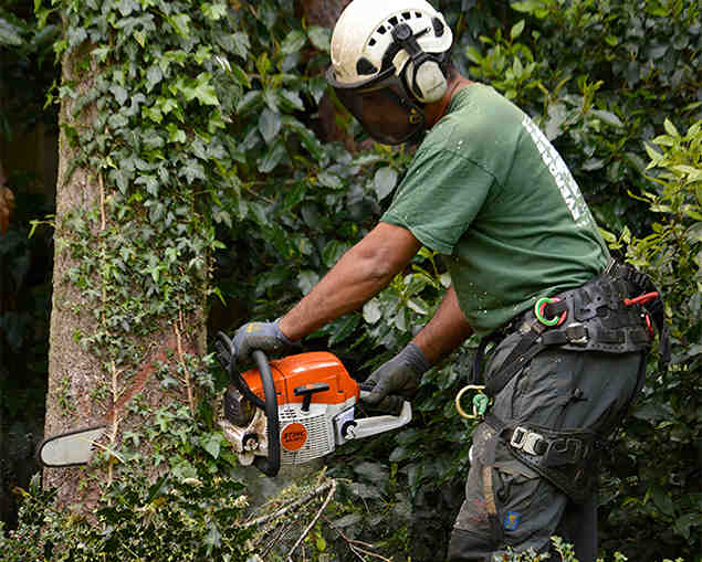 tree surgeon anerley