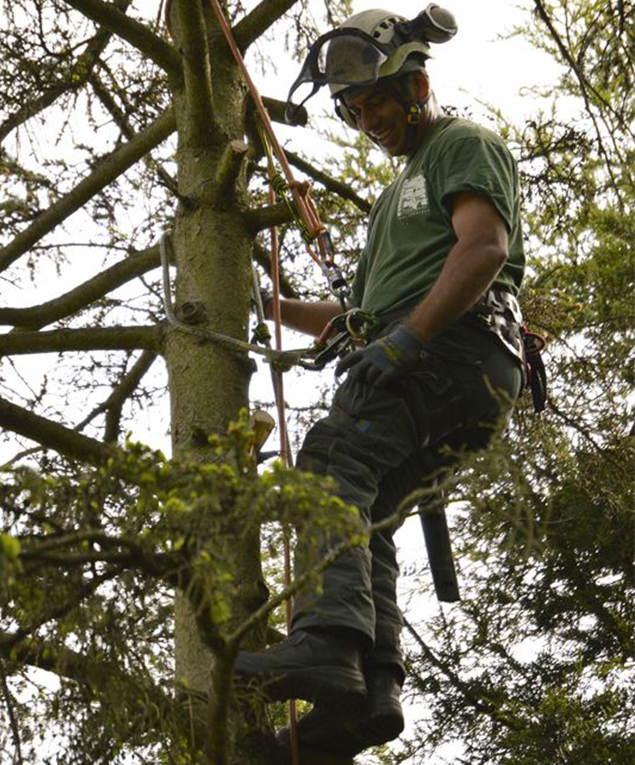 Tree Surgeon Sundridge Park