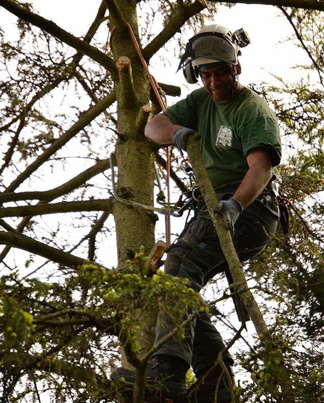 Tree Surgeons Farnborough