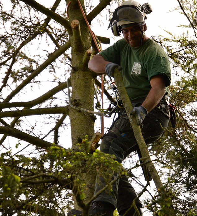 Qualified Tree Surgeons in Woodside