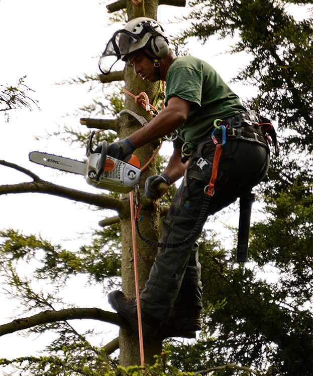 Tree Surgeons in Addiscombe
