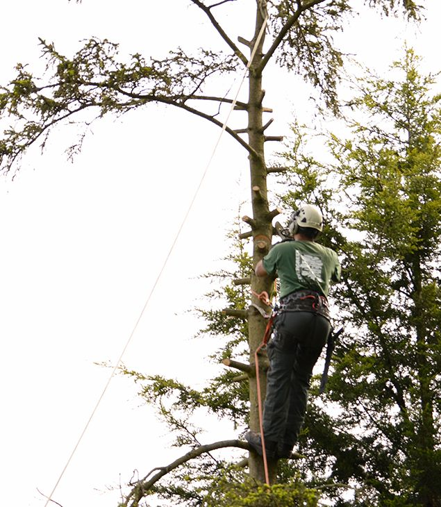 Expert Tree Surgeons in Bromley Common