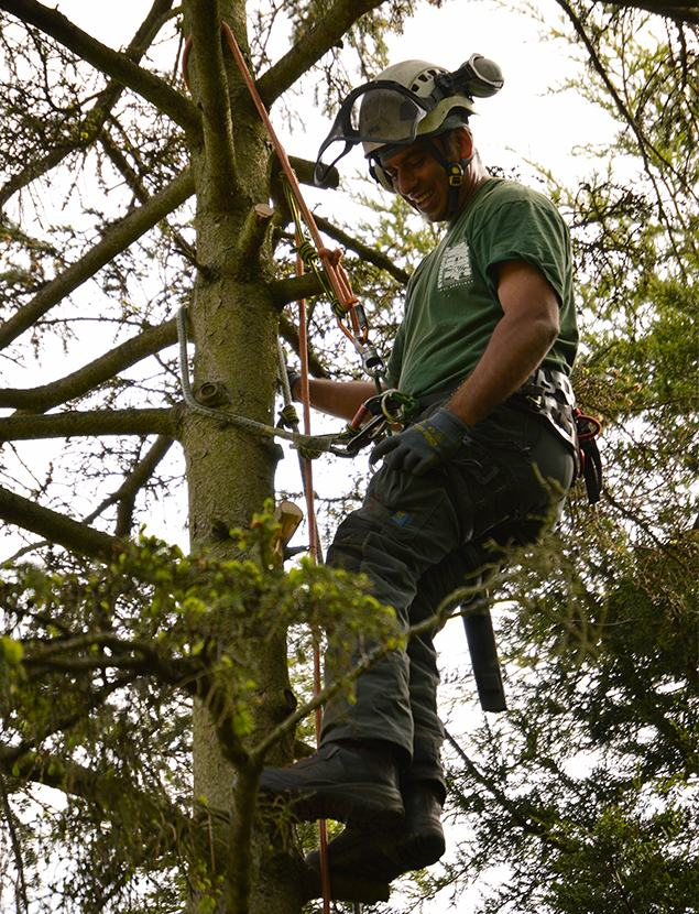 Tree Surgeons in Green St Green
