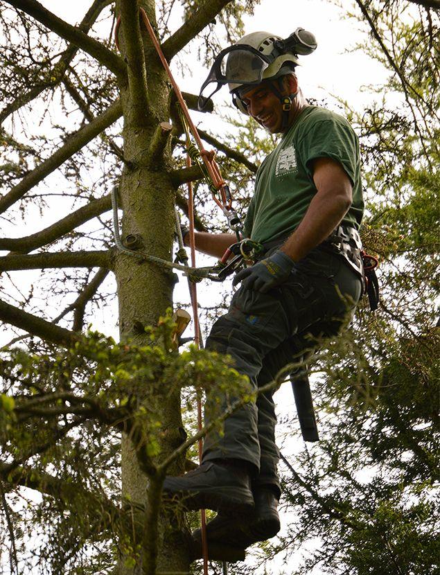 Tree Surgeons in New Addington