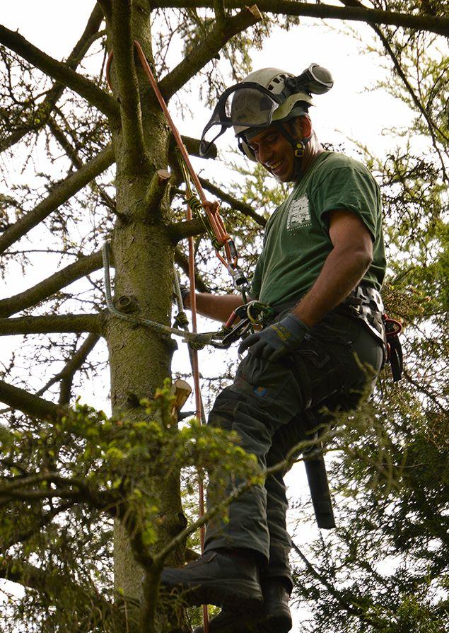 Tree Surgeons in Selhurst