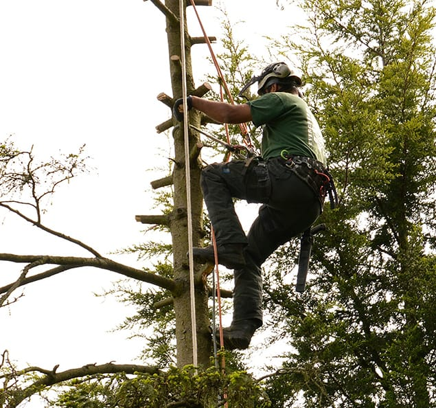 Tree Surgeons in Sydenham