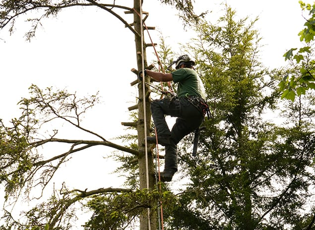 Tree Surgery St Mary Cray