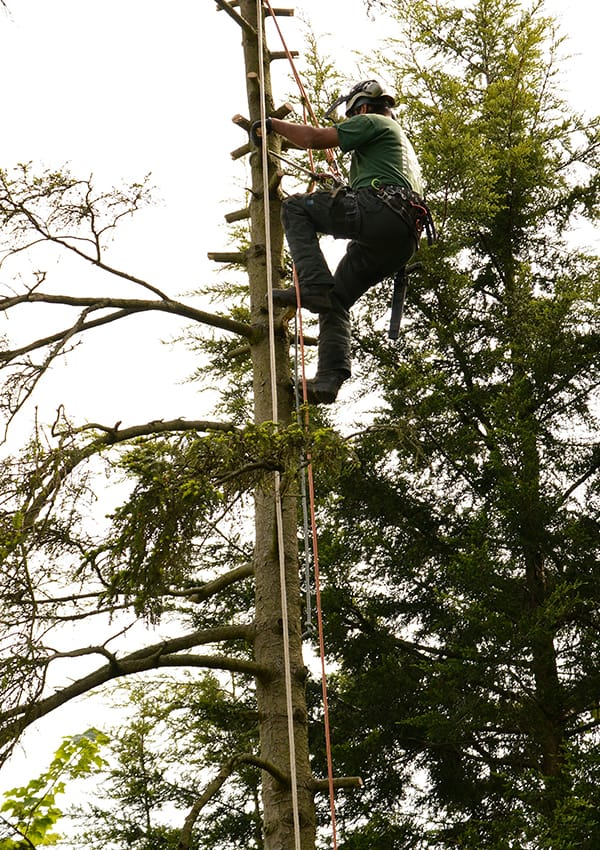 Tree Surgery Chelsfield