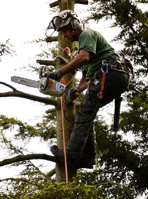 Tree Surgery Warlingham
